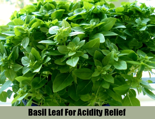 Basil Leaf For Acidity Relief