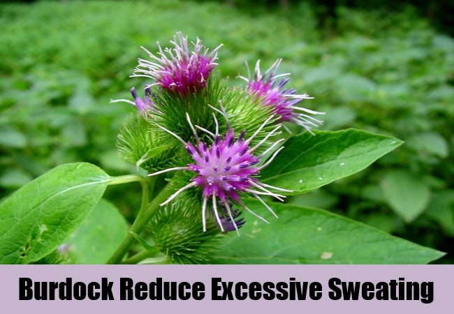 Burdock Reduce Excessive Sweating