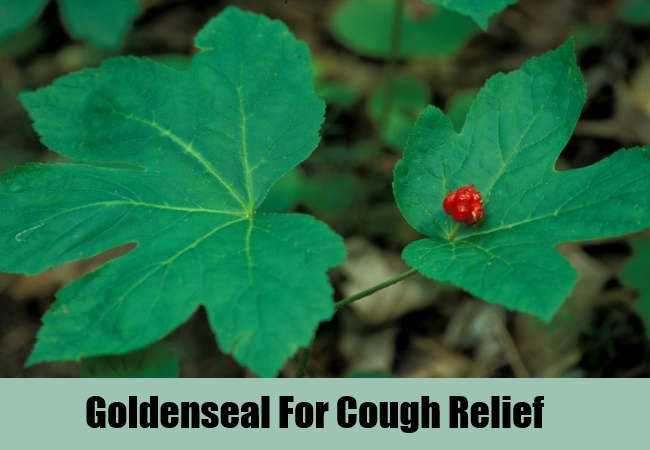 Goldenseal For Cough Relief