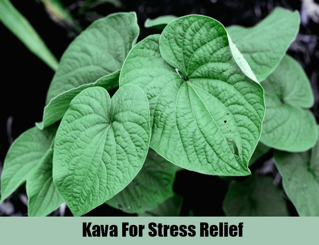 Kava For Stress Relief