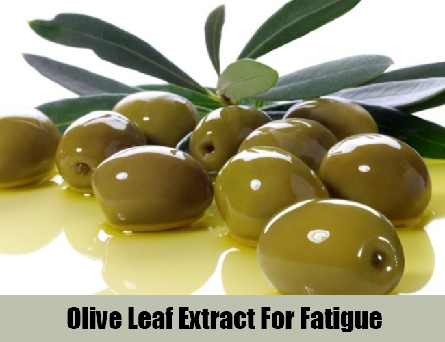 Olive Leaf Extract For Fatigue