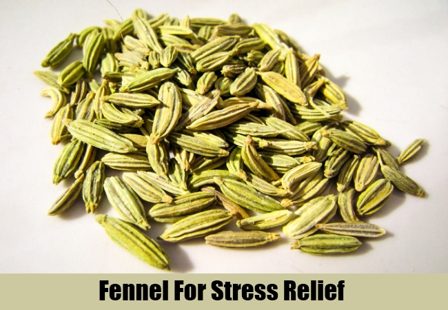 Fennel For Stress Relief