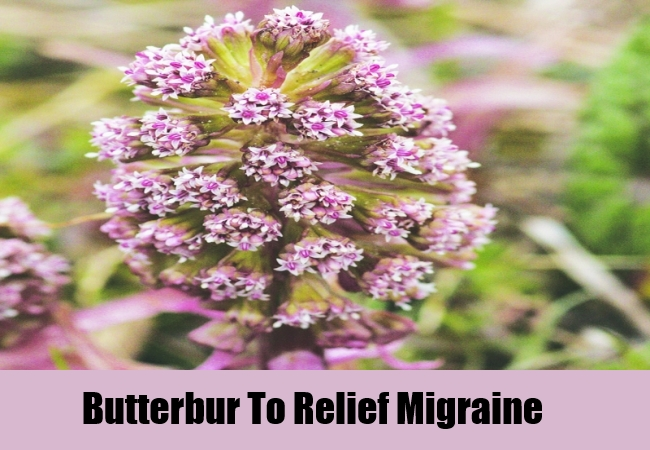 Butterbur To Relief Migraine
