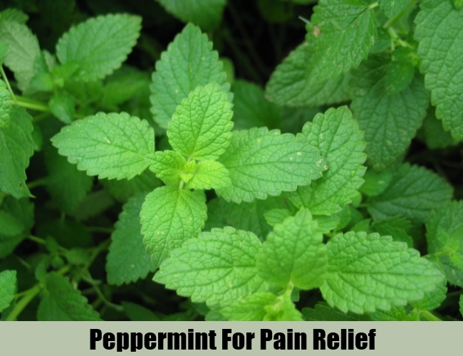 Peppermint For Pain Relief