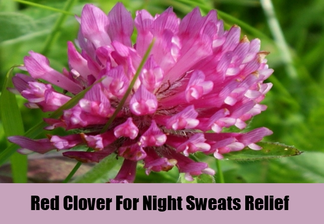 Red Clover For Night Sweats Relief