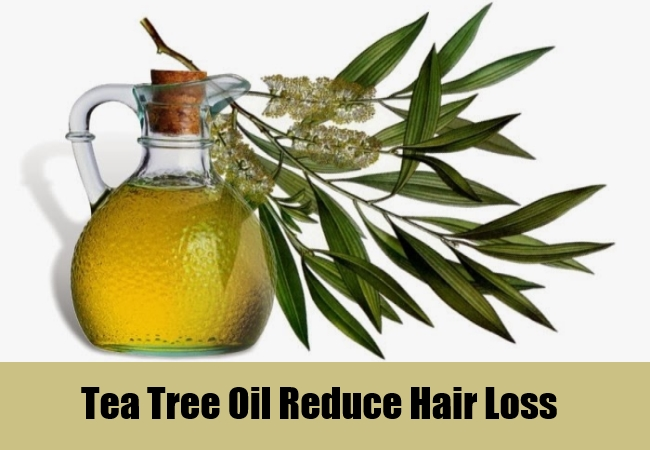 Tea Tree Oil Reduce Hair Loss