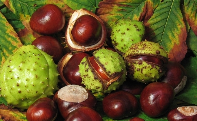 Try Horse Chestnut
