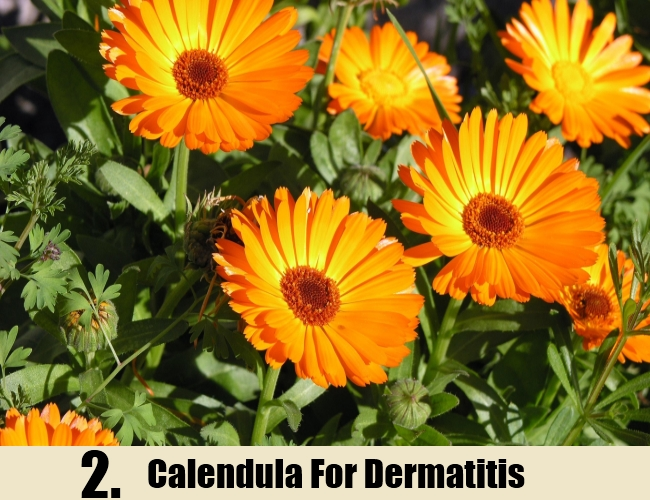 Calendula For Dermatitis