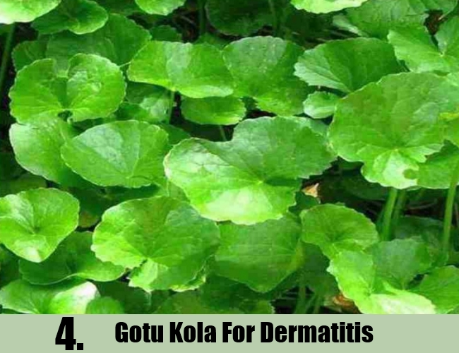 Gotu Kola For Dermatitis
