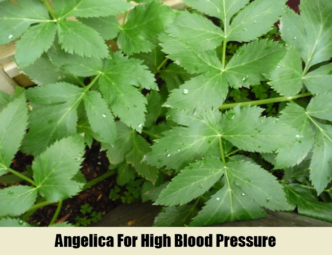 Angelica For High Blood Pressure