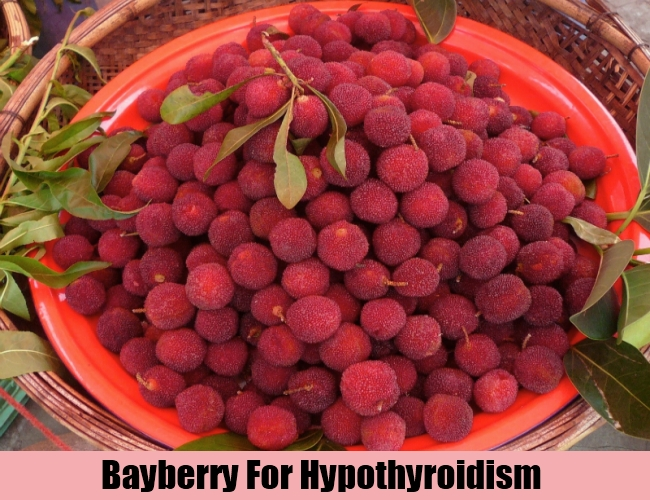 Bayberry For Hypothyroidism