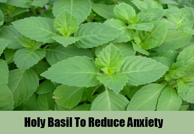 Holy Basil To Reduce Anxiety