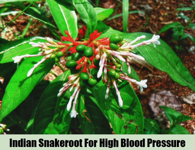Indian Snakeroot For High Blood Pressure
