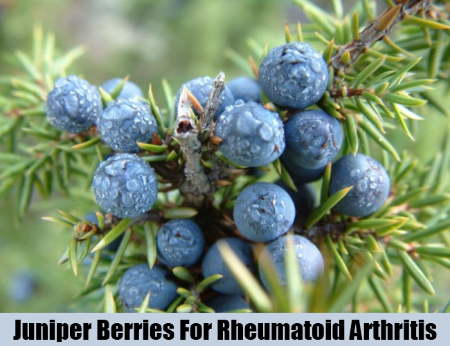 Juniper Berries For Rheumatoid Arthritis