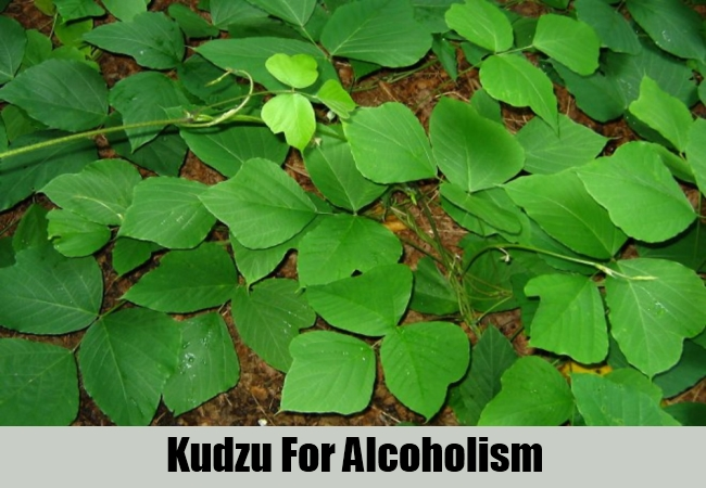 Kudzu For Alcoholism