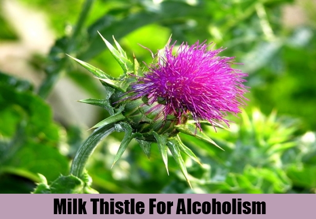 Milk Thistle for alcoholism