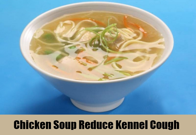 Chicken Soup Reduce Kennel Cough
