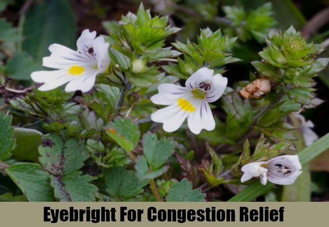 Eyebright For Congestion Relief