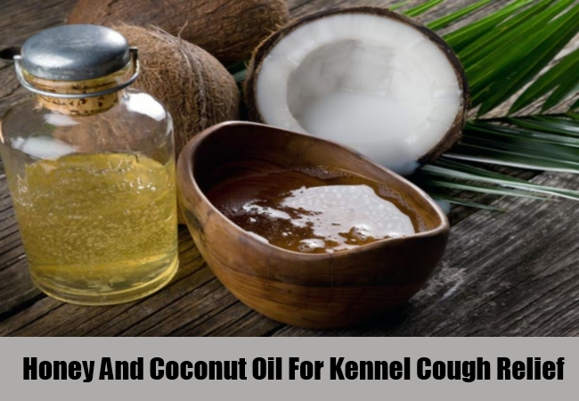 Honey And Coconut Oil For Kennel Cough Relief