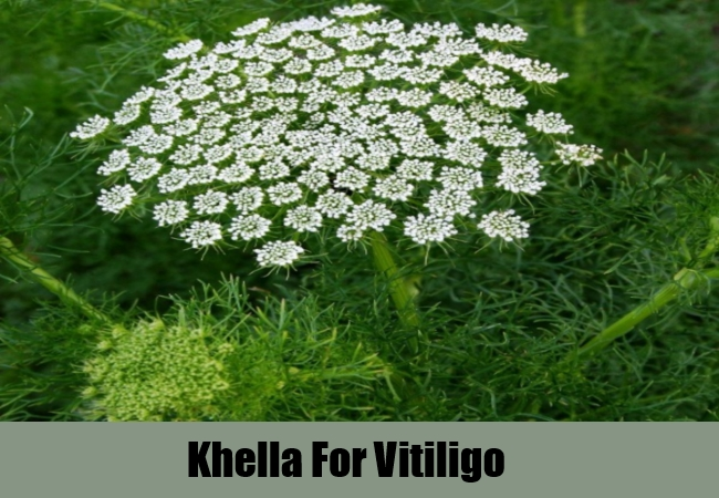 Khella For Vitiligo