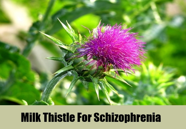 Milk Thistle For Schizophrenia