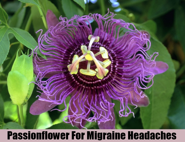 Passionflower For Migraine Headaches