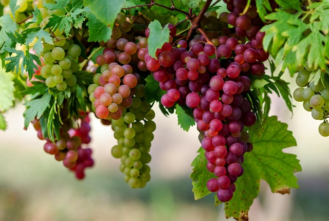 Have Grapes