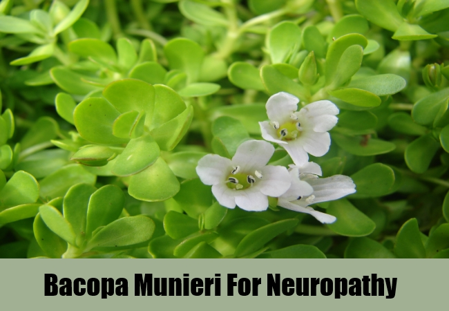 Bacopa Munieri For Neuropathy