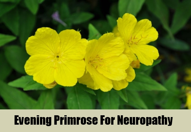 Evening Primrose For Neuropathy