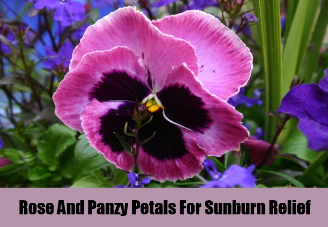 Rose And Panzy Petals For Sunburn Relief