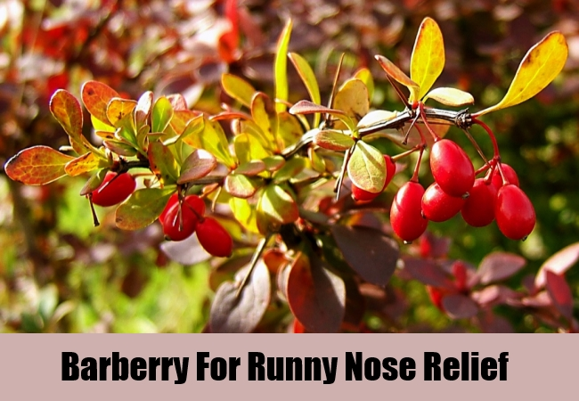 Barberry For Runny Nose Relief