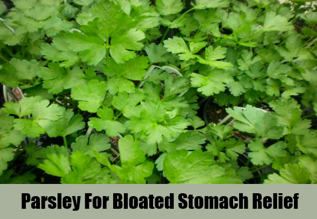 Parsley For Bloated Stomach Relief
