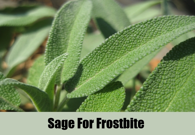 Sage For Frostbite