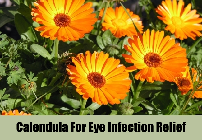 Calendula For Eye Infection Relief