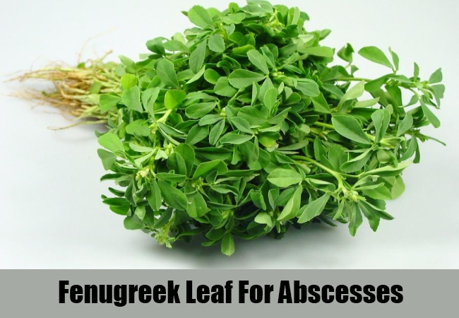 Fenugreek Leaf For Abscesses