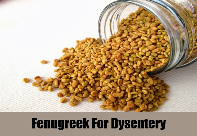 Fenugreek For Dysentery