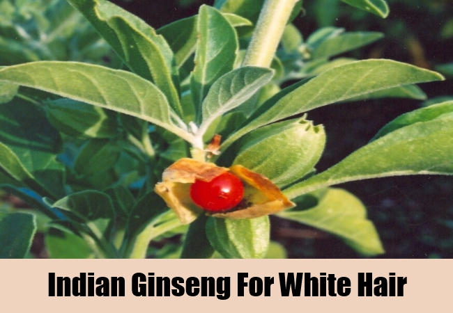 Indian Ginseng For White Hair