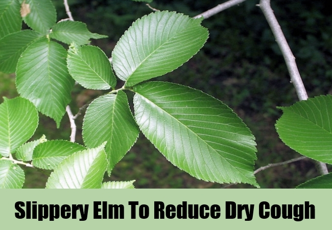 Slippery Elm To Reduce Dry Cough