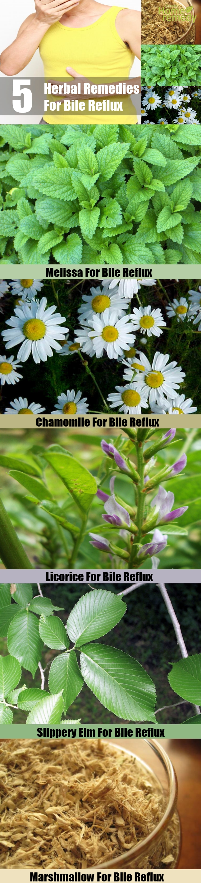 5 Herbal Remedies For Bile Reflux