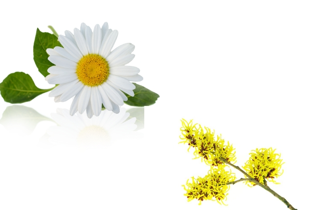 Chamomile And Witch Hazel
