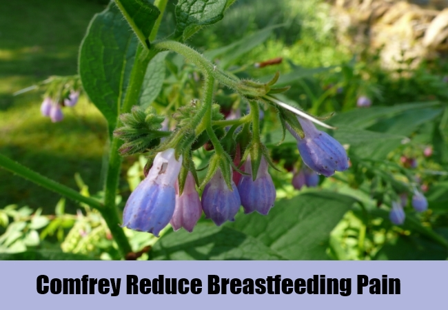 Comfrey Reduce Breastfeeding Pain