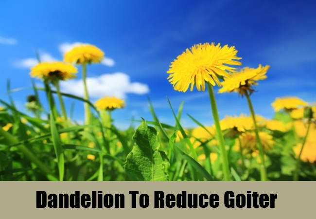 Dandelion To Reduce Goiter