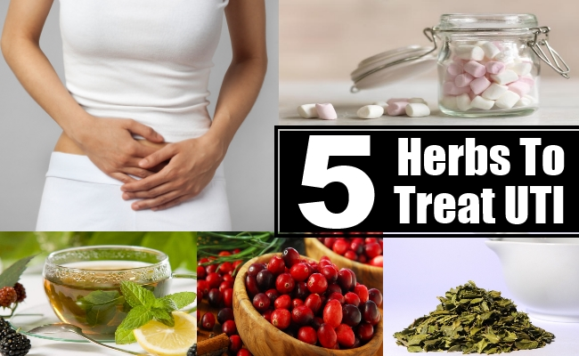 Herbs To Treat UTI