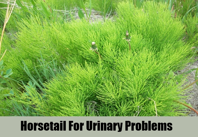 Horsetail For Urinary Problems