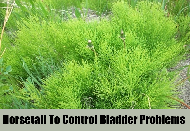 Horsetail To Control Bladder Problems