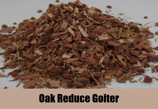 Oak Reduce Goiter