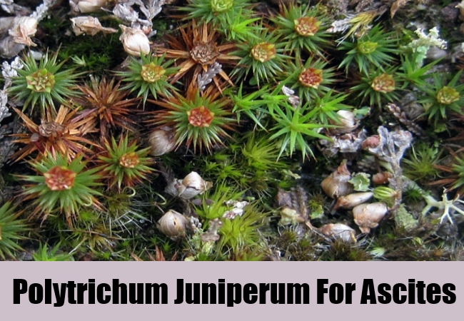 Polytrichum Juniperum For Ascites