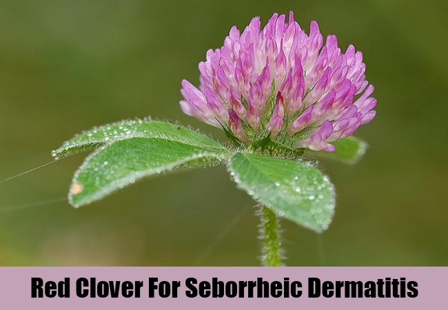 Red Clover For Seborrheic Dermatitis