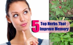 5 Top Herbs That Improve Memory