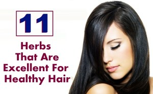 11 Herbs That Are Excellent For Healthy Hair